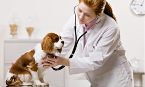 Sun-Surf Animal Hospital: $55 for a Dog-Vaccination Package at Sun-Surf Animal Hospital ($119 Value)