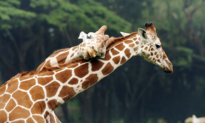 San Francisco Zoo - San Francisco: Visit to the San Francisco Zoo for One Adult and One Child, or Two Adults and Two Children (Up to 42% Off)
