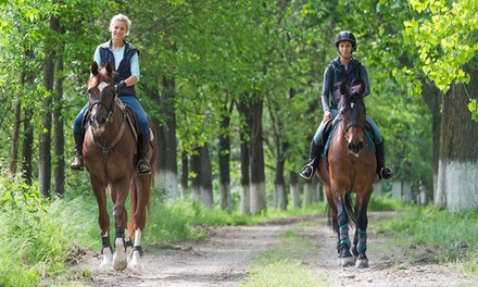 $39 for a One-Hour Intro to Horsemanship Riding Lesson at 12 Mile Stables ($79 Value)