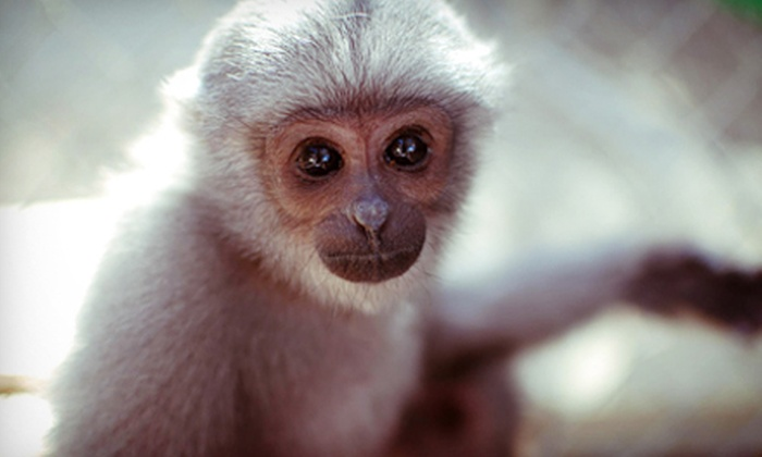 Gibbon Conservation Center - Canyon Country: Admission for Two or Four or Private Tour for Up to 10 to Gibbon Conservation Center (Up to 53% Off)