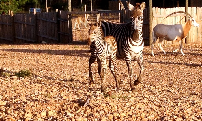 Capital of Texas Zoo - Cedar Creek-Red Rock: Zoo Admission for Two or Four at Capital of Texas Zoo (Up to 60% Off)