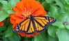 Newport Butterfly Farm - Tiverton: Visit for Four or Eight with Passes to Monarch Migration Celebration at The Butterfly Zoo (Half Off)