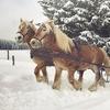Pferdeschlitten-oder Kutschfahrt