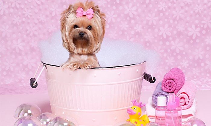 My Yuppy Puppy - Downtown Fort Pierce:  $10 for Dog grooming package from My Yuppy Puppy ($35 value)