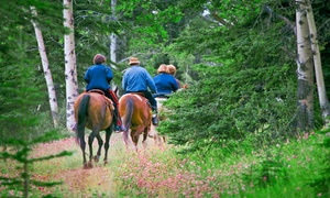 Cimarron Ranch: Horseback-Riding Lessons at Cimarron Ranch (Up to 51% Off). Three Options Available.