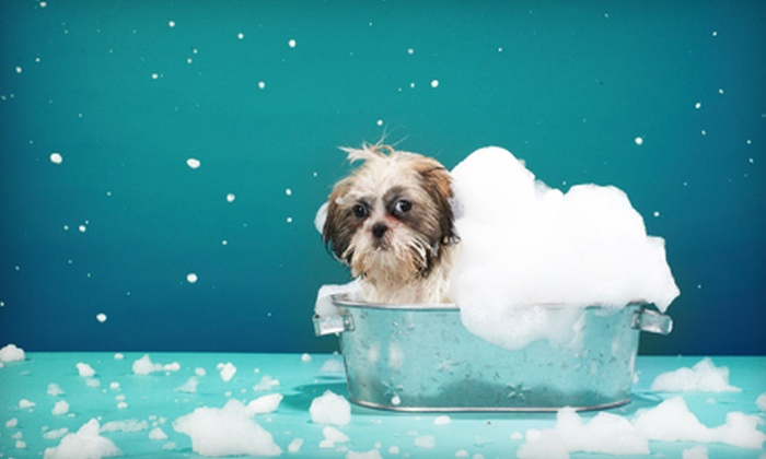 A.P.A.W. Veterinary Hospitality and Wellness Center - Greenbelt: Pet Boarding at A.P.A.W. Veterinary Hospital and Wellness Center in Lanham (Up to 61% Off). Four Options Available.