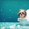 Up to 61% Off Pet Boarding and Daycare in Lanham