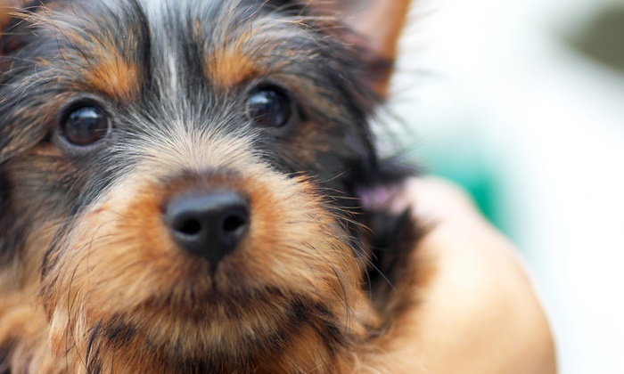 The Poochie Place - Bowery: Full Groom or Full Bath at The Poochie Place (Up to 51% Off). Six Options Available.