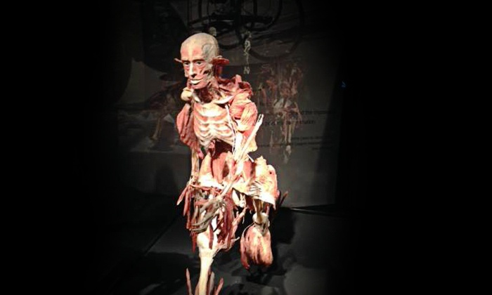 BODY WORLDS Vital - Downtown: Admission to Body Worlds Vital Exhibit at Faneuil Hall Marketplace (Up to 46% Off)