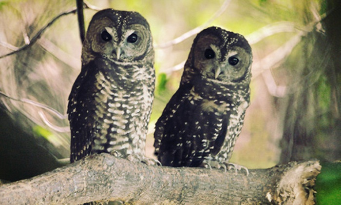 Mountain View Conservation & Breeding Centre - Langley: Adoption of a Northern Spotted Owl and Tour for Two or Four at Mountain View Wildlife Conservation (Up to 62% Off)