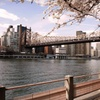 Stay at Z NYC Hotel in Queens, New York
