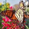 Up to 50% Off a Botanical Gardens Visit