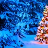 50% Off Christmas Trees, Wreaths, and Garlands