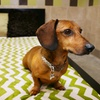 Up to 52% Off Dog Care at Pooch Hotel
