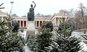 Christbaumdealer.de München: Wertgutschein über 30 oder 50 € anrechenbar auf einen Weihnachtsbaum von Christbaumdealer.de München