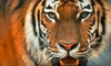 The Buffalo Zoo - Delaware Park: Buffalo Zoo Visit for Two or Four (Up to 55% Off)