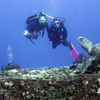 Up to 52% Off Scuba Diving