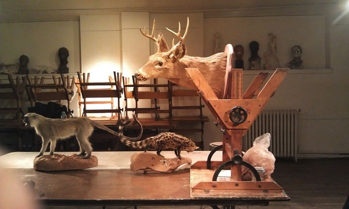Animal Skull Sculpting Class - Philadelphia Sculpture Gym: Sculpt an Animal Skull with a Professional Artist