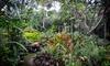 Botanical World Adventures - Big Island: Two or Four One-Week Botanical Garden Passes at Botanical World Adventures (Up to 62% Off)