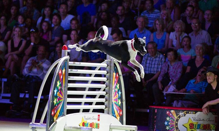 """SuperDogs: """"Wild, Wild, Woof"""" - The Ryan Center(Boss Ice Arena)/URI Athletics: SuperDogs: """"Wild, Wild, Woof"""" for Two or Four at Thomas M. Ryan Center on Friday, May 2 (Up to 53% Off)"""
