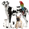 Up to 53% Off In-Home Pet Care