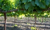 Jess Jones Vineyard - Dixon: Wine-Tasting Package with a Tour, Appetizers, and Bottles of Wine at Jess Jones Vineyard (Up to 47% Off)