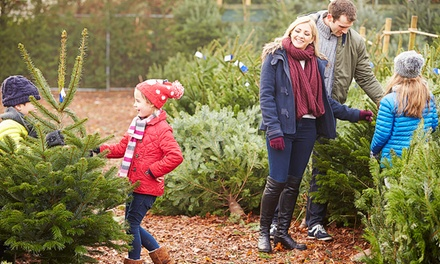 $39 for One Pre-Cut and Pre-Selected Fir Christmas Tree​ ​at Bosch Countryview Nursery ($75 Value)
