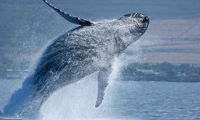 Pacific Nature Tours - Mission Bay Park: Coronado Islands Whale Watching and Nature Tour for 1, 2, or 4 from Pacific Nature Tours (Up to 56% Off)
