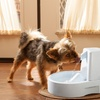 Drinkwell Original Pet Fountain Bundle. Two Options Available.