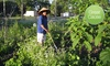 Community Crops: $10 Donation to Community Crops