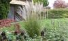 """Plant de Miscanthus """"Kleine Silberspinne"""""""