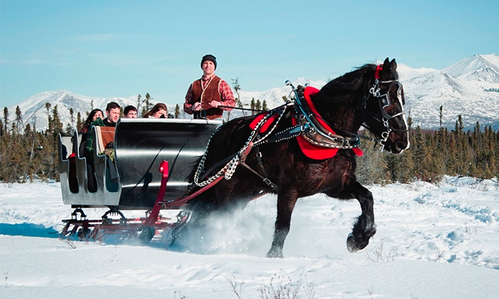 Alaska Horse Adventures, LLC  - Alaska Horse Adventures LLC: Horse-Drawn Sleigh Ride for Two or Four or Sleigh Rental from Alaska Horse Adventures LLC (Up to 50% Off)