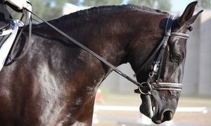 GREEN BAY: 5, 7 o 10 lezioni di equitazione con istruttori FISE