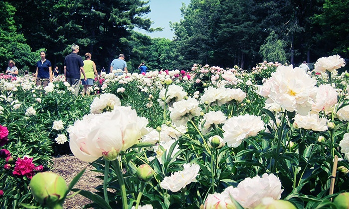 The University Of Michigan Matthaei Botanical Gardens   Ann Arbor: Couple  Or Family Membership At ...