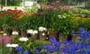 Up to 40% Off Flowers and Plants from Budd Gardens