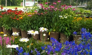 Budd Gardens Ltd.: CC$18 for CC$30 Worth of Perennials and Hostas at Budd Gardens