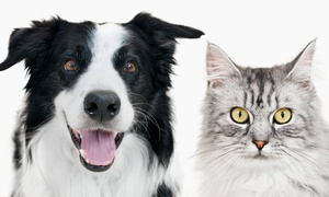West End Animal Wellness Center: New Pet Exam and Vaccines for One Dog or Cat at West End Animal Wellness Center (Up to 51% Off)
