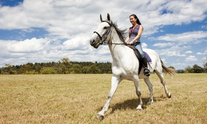 Countryside Farm: One, Two, or Three 30-Minute Private Horseback-Riding Lessons at Countryside Farm (50% Off)