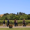 73% Off Tour and Tasting at Rideau Vineyard