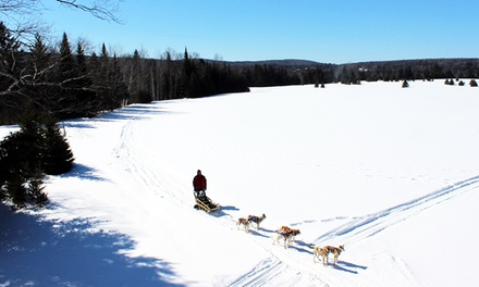 One Hour of Dogsledding for One or Two with Aventure Quatre Saisons (Up to 58% Off)