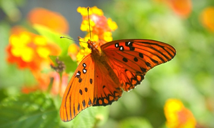 Timberline Farm - Silver Springs Shores: Butterfly Festival for Two or Four at Timberline Farm in Belleview (Half Off)