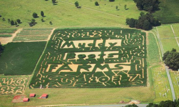 Get Lost Corn Maze - Albemarle: Get Lost Corn Maze for Two or Four (Half Off)
