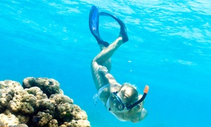 Al Bahar Al Azraq Diving Center: Snorkelling Experience (from AED 99) or Boat Try-Dive (AED 179) with Al Bahar Al Azraq Diving Center (Up to 74% Off)