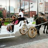 Half Off Private Ride from Sugar Creek Carriages