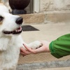 Up to 51% Off Pet Boarding