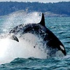 Half Off Whale-Watching Cruise in Bellingham