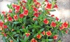 Yerba Buena Native Plant Nursery - Half Moon Bay: $15 for $30 Worth of Native California Plants at Yerba Buena Nursery in Woodside