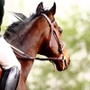 Up to 41% OffPrivate English-Riding Lesson