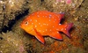 Diving Catalina - Avalon: Traditional or Power-Snorkeling Tour of Casino Point Underwater Dive Park from Diving Catalina (Up to 41% Off)