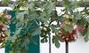 1 o 2 piante di Ficus Carica